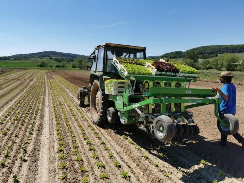 Nach einer langen Regenphase kann endlich Salat gepflanzt werden.