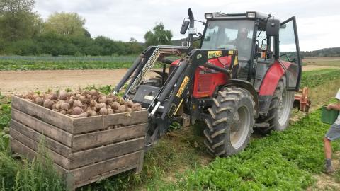 Der Traktor mit Frontlader hebt die mit Beten gefüllte Großkiste an.